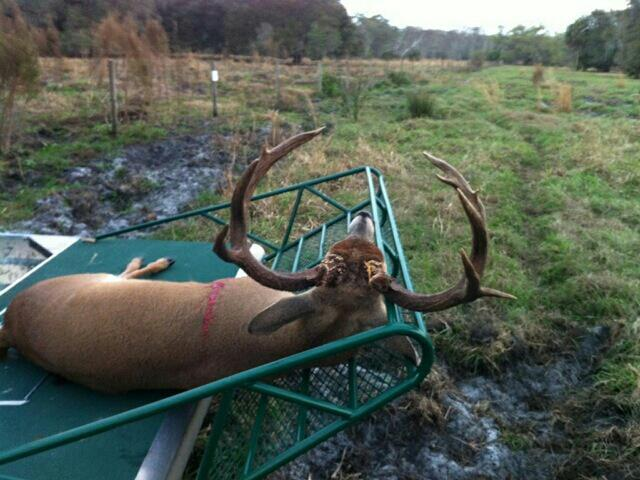 a airboat buck